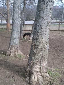 park-pup