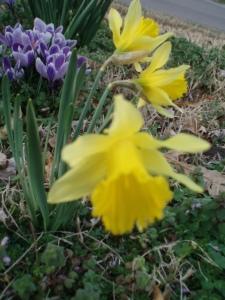 spring-flowers2