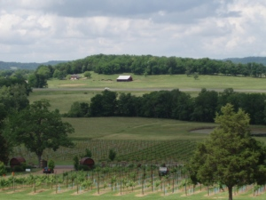perfect vineyard