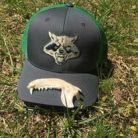 Raccoon jaw bone